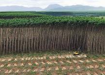 Plantagen sind kein Wald